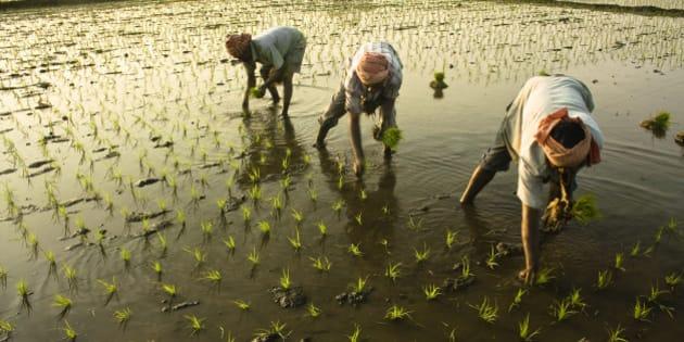 Three farmer working at field.