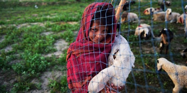 In this photograph taken on March 25, 2015, the daughter of Indian nomadic shepherds Mansa, 8, holds her favourite sheep Bhuri at her familiy's camp in Sikri in Faridabad some 50 kms from New Delhi. The shepherds trek long distances in search of pasture for their 2,500 sheep which they make a living from by selling the male lambs and their wool. While the men graze and milk the sheep, the familiy's women cook, fetch water and churn butter, and move from camp to camp year-round, stopping for baths and laundry only when they find accessible water, and eventually make their way home to the western state of Rajasthan. The family earns approximately 250,000 rupees ($4,032) every six months. AFP PHOTO/MONEY SHARMA        (Photo credit should read MONEY SHARMA/AFP/Getty Images)
