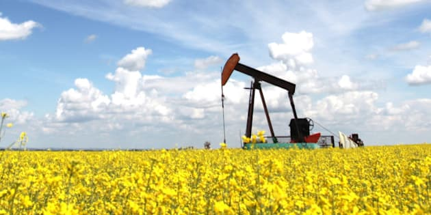 A pumpjack in a canola field. The oil industry is a major economic force in Alberta. This oil rig is located in an oil field near Calgary. Drilling rigs first drill a well and then the pumpjack is situated over the well, or borehole. Crude oil is then shipped via rail or pipeline. The Keystone pipeline will deliver oil through the United States from the oil sands in Northern Alberta.