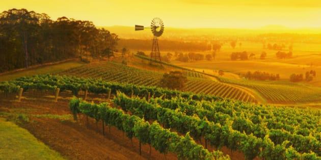 Windmill in vineyards, Hunter Valley wine region, New South Wales, Australia.