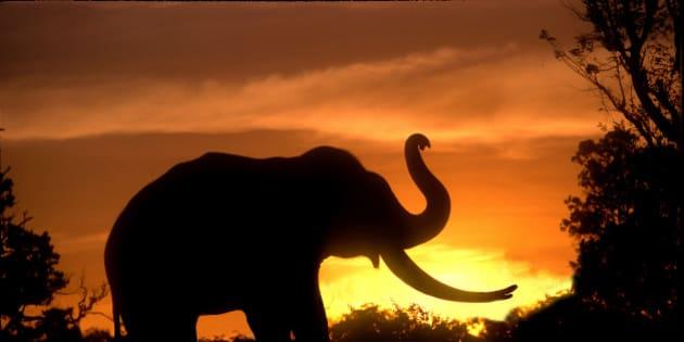 Silhouette of elephant, India.