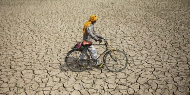 An Indian farmer pushes his bicycle past a parched paddy field in Ranbir Singh Pura, about 34 kilometers (21 miles) from Jammu, India, Tuesday, July 15, 2014. Delayed monsoon rains have raised fears of possible drought in some regions with the meteorological department reporting an acute deficit in rainfall in many areas, according to news reports. (AP Photo/Channi Anand)