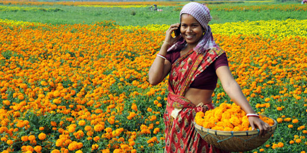 Village woman plucking marigold while receiving mobile call.