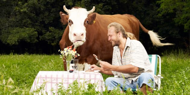 Man eating steak in field with cow