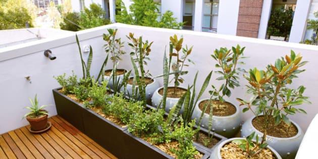 9 Easy Ways To Start An Awesome Urban Garden