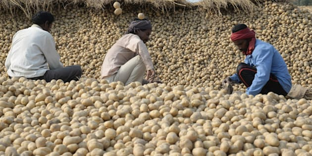 Indian farm labourers sort potatoes in a field on the outskirts in Jalandhar on February 29, 2016. India aims to double the income of its millions of struggling farmers including by spending 359 billion rupees (USD5.2 billion) on boosting the vast agriculture sector, in plans outlined in the annual budget. Finance Minister Arun Jaitley said the government was focusing on boosting livelihoods in rural areas where more than half of the country's population lives. AFP PHOTO / SHAMMI MEHRA / AFP / SHAMMI MEHRA        (Photo credit should read SHAMMI MEHRA/AFP/Getty Images)
