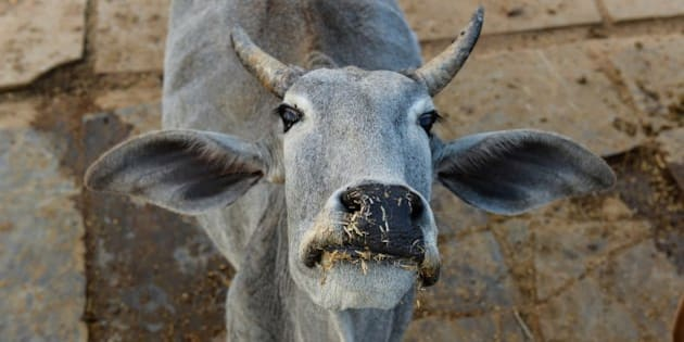 To go with India-politics-religion-beef,FOCUS by Abhaya SRIVASTAVA
