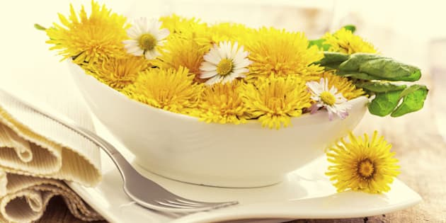 dandelion blossoms in a bowl - like a light salad