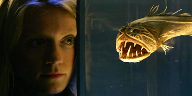 London, UNITED KINGDOM:  A  visitor to the Science Museum in London, studies a Fangtooth fish, 13 October, at the new exhibition ' The Science of Aliens' which runs from the 15 October until 26 February 2006. AFP PHOTO /MARTYN HAYHOW  (Photo credit should read MARTYN HAYHOW/AFP/Getty Images)