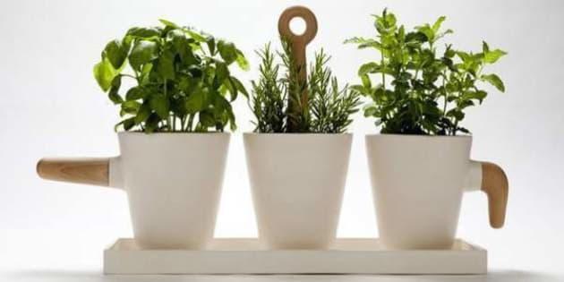 I \'cuccioli\' delle piante, micronutrienti da coltivare in cucina | L ...