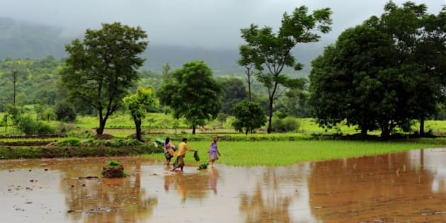 Locals working in paddy fields near Pune, India. Most of the villages around Pune are dependent of yearly monsoon for rice cultivation.