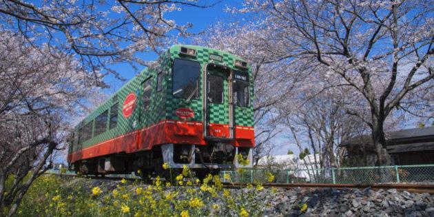 Japan, Kanto Region, Tochigi Prefecture, Moka, View of Moka Railway Line with cherry tree. (Photo by: JTB/UIG via Getty Images) (Photo by: JTB Photo/UIG via Getty Images)