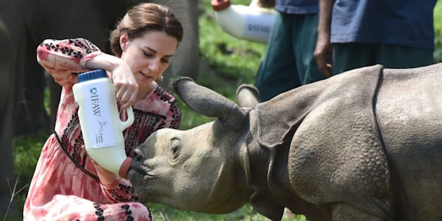 GUWAHATI, INDIA - APRIL 13:  Catherine, Duchess of Cambridge visits the Centre for Wildlife Rehabilitation and Conservation at Kaziranga National Park on April 13, 2016 in Guwahati, India.  (Photo by UK Press Pool/Getty Images)