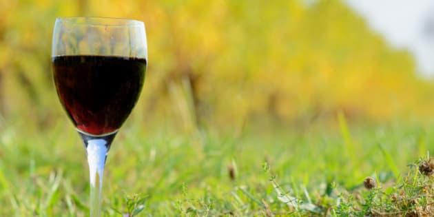 Glass of Bordeaux wine among vineyards