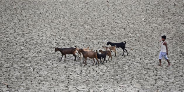 An indian boy follows a herd of goat on a parched water pond in Kaushambi, nearly 25 kms from Allahabad, India, Tuesday, May 3, 2016. Much of India is reeling under a weeks long heat wave and severe drought conditions that have decimated crops, killed livestock and left at least 330 million Indians without enough water for their daily needs. (AP Photo/Rajesh Kumar Singh)