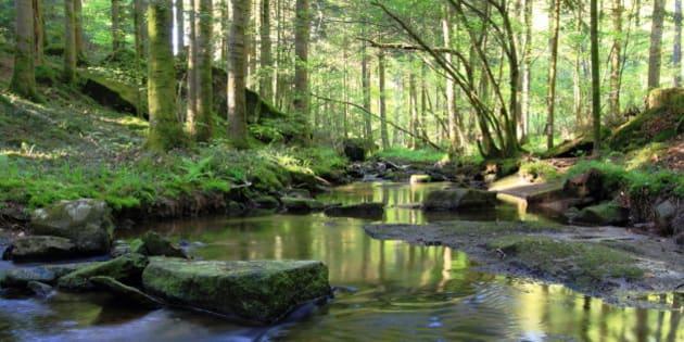 paysage de sous bois en forêt où s'écoule paisiblement une petite source
