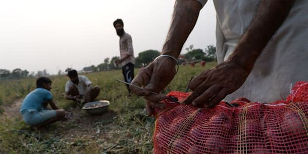 An Indian farmer packs onions for sale in market in a field some 30kms north of Chandigarh on May 8, 2016. / AFP / PRAKASH SINGH        (Photo credit should read PRAKASH SINGH/AFP/Getty Images)