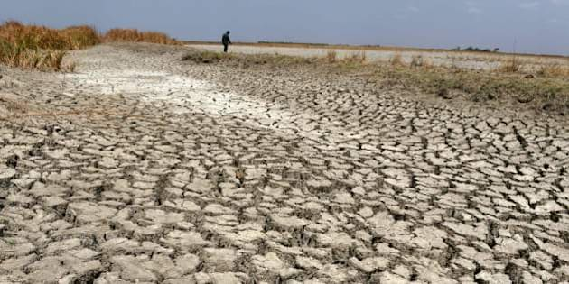 An Indian man walks on a dried out portion of wetlands at Nalsarovar Bird Sanctuary, some 70kms from Ahmedabad on May 29, 2016.   Migratory flamingoes are being encouraged to stay at the wetlands in the western state of Gujarat as the locating of shoals of fish which form the diet of the flamingos, is made easier with the falling levels of water which are the result of drought conditions which are prevailing across northern India.  / AFP / SAM PANTHAKY        (Photo credit should read SAM PANTHAKY/AFP/Getty Images)