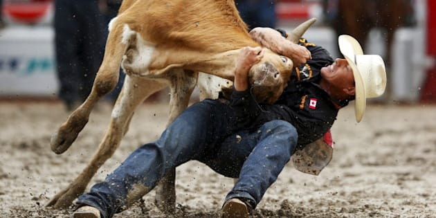 Cody Cassidy of Donalda, Alberta wrestles a steer in the Steer Wrestling event during Championship Sunday at the finals of the Calgary Stampede rodeo in Calgary, Alberta, July 12, 2015. REUTERS/Todd Korol