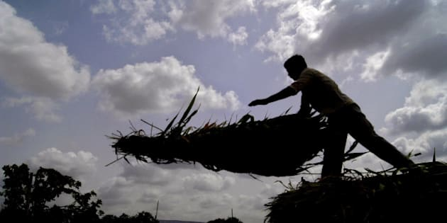 An unidentified farmer unloads grass against a backdrop of pre-monsoon clouds on the outskirts of Ahmadabad, India, Monday June 9, 2003. Grass for cattle is scarce in western India where more than 3.6 million people have been hit by drought in five of 23 districts in Gujarat and 6 of 17 districts of Rajasthan states for a third straight year because of poor monsoon rains. (AP Photo/Siddharth Darshan Kumar)