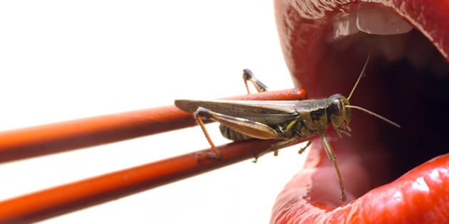 'a wacky take on sushi, red lips getting ready to eat a live grasshopper with chopsticks'