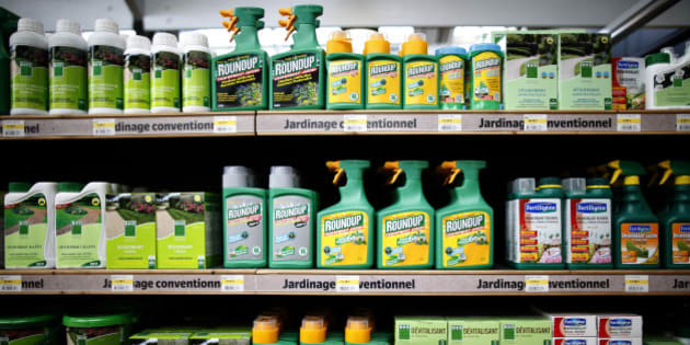 """Weedkillers including Monsanto's Roundup are displayed for sale at a garden shop at Bonneuil-Sur-Marne near Paris, France, June 16, 2015. French Environment and Energy Minister Royal has asked garden shops to stop over-the-counter sales of Monsanto's Roundup weedkiller as part of a wider fight against pesticides seen as potentially harmful to humans.The International Agency for Research on Cancer (IARC), part of the World Health Organization (WHO), said in March that glyphosate, the key ingredient in Monsanto's Roundup was """"probably carcinogenic to humans.""""     REUTERS/Charles Platiau"""