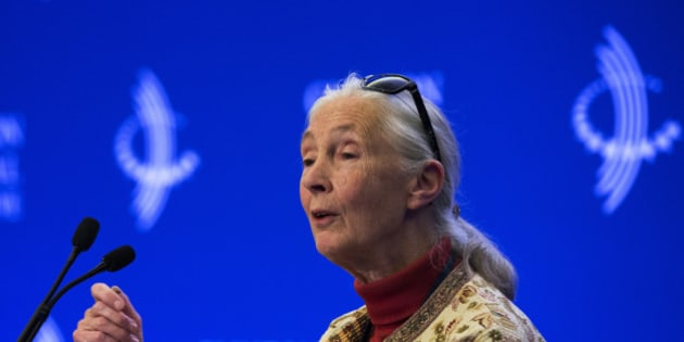 """Dame Jane Goodall attends a panel on """"Commitment to Action: Partnership to Save Africa's Elephants"""" at the Clinton Global Initiative (CGI) in New York September 26, 2013. The CGI was created by former U.S. President Bill Clinton in 2005 to gather global leaders to discuss solutions to the world's problems.     REUTERS/Lucas Jackson (UNITED STATES  - Tags: ENVIRONMENT POLITICS)"""