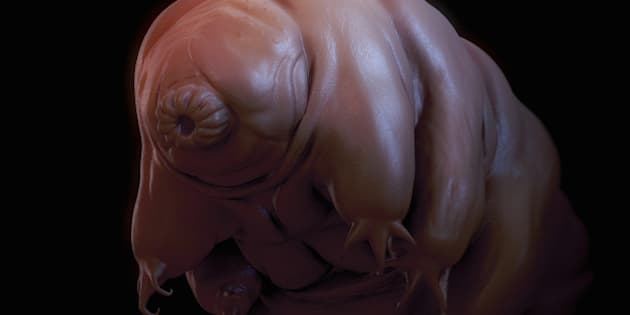 Close-up view of a single Water Bear (Tardigrades).