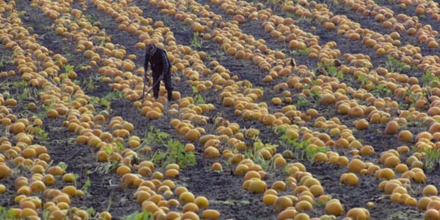 Canada, British Columbia, Victoria, Saanich Peninsula, Farmer working a field