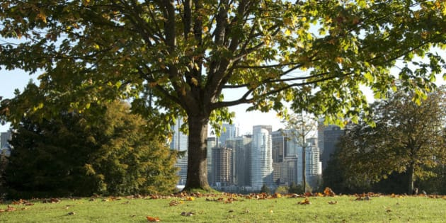 The downtown Vancouver skyline peaks through the fauna of neighbouring Stanley Park.