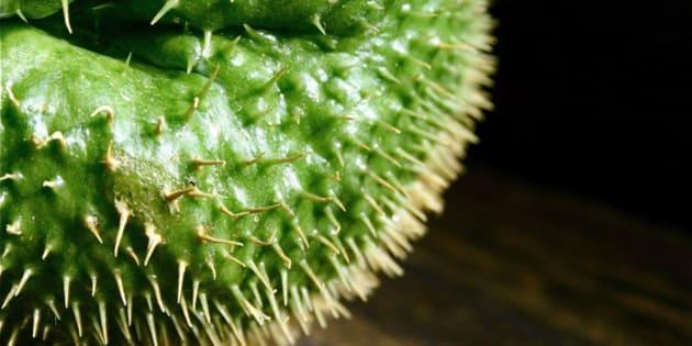 Che cos\'è il Chayote? 8 idee per cucinare la melanzana \