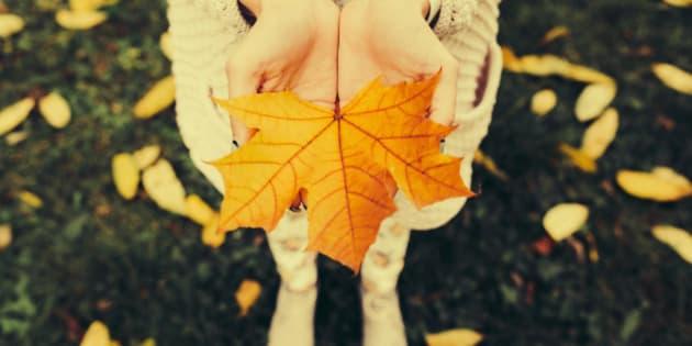 Autumn leaves in girl hands, instagram toned