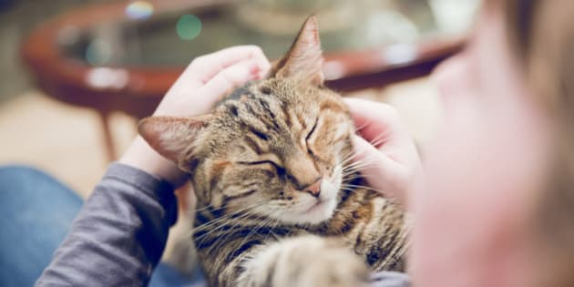 Close up of woman petting contented cat