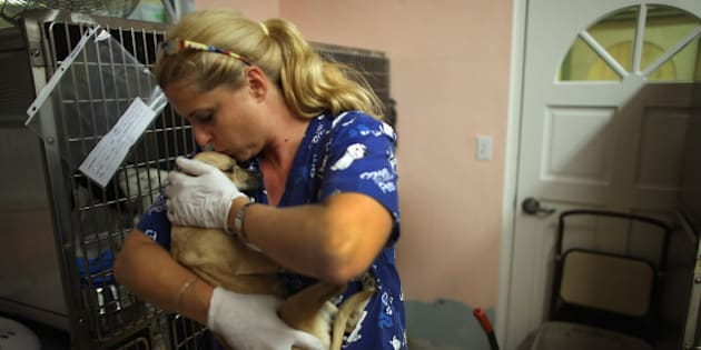 BOCA RATON, FL - MAY 30:  Melissa Lipman, a veterinarian technician volunteer,  cares for a dog rescued from the ruins after a deadly tornado struck near Oklahoma City, Oklahoma  at the Tri County Humane Society in Boca Raton on May 30, 2013 in Boca Raton, Florida. Workers at the animal shelter brought 65 dogs and 15 cats back from the disaster zone last night with plans to treat the animals for injuries, give them needed shots and adopt them out to families in about a week.  (Photo by Joe Raedle/Getty Images)