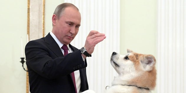 MOSCOW, RUSSIA - DECEMBER 13, 2016: Russia's President Vladimir Putin with his Akita dog named Yume before giving an interview to Nippon Television Network Corporation (Nippon TV) and the Yomiuri Shimbun newspaper, at the Moscow Kremlin. Putin is to visit Japan on December 15-16, 2016. Alexei Druzhinin/Russian Presidential Press and Information Office/TASS (Photo by Alexei Druzhinin\TASS via Getty Images)