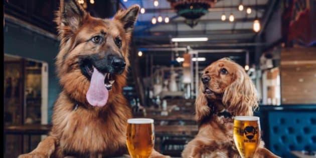 犬好き社員、歓喜? ビール会社が「犬休」導入、どんな制度?