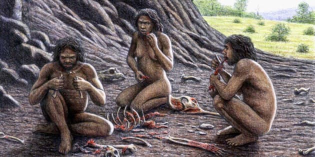Homo antecessor practicing cannibalism, illustration. The remains of this hominid were discovered in level TD6 of the Gran Dolina archaeological sites in Sierra de Atapuerca, Spain. Some of the remains contained cuts on the bones suggesting that this hominid may have practiced cannibalism. It lived between 600, 000 and 250, 000 years ago during the Pleistocene era, averaging about 5.5 feet in height and weighing up to 200 pounds.
