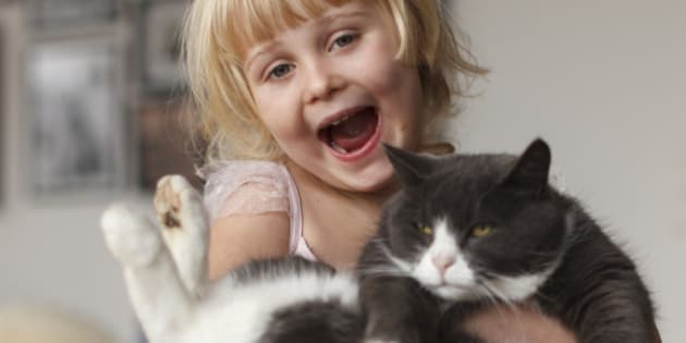 A happy smiling blond child holding a household cat in her arms.