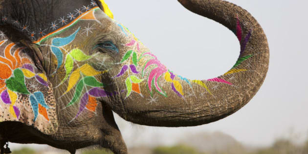 Decorated elephant at the annual elephant festival in Jaipur, Rajasthan in India.