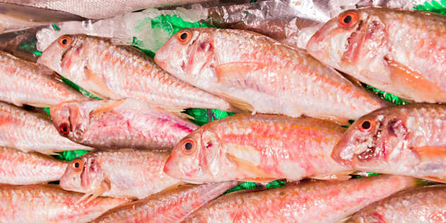 Fresh red mullet for sale on fish market of Madrid, Spain