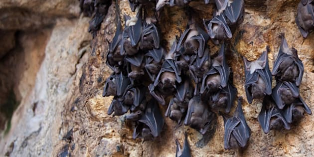 bats hanging on a rock in a cave