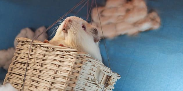 """Don't worry -- no guinea pigs were actually airborne during Audrey's """"Around The World in 80 Days"""" photoshoot."""