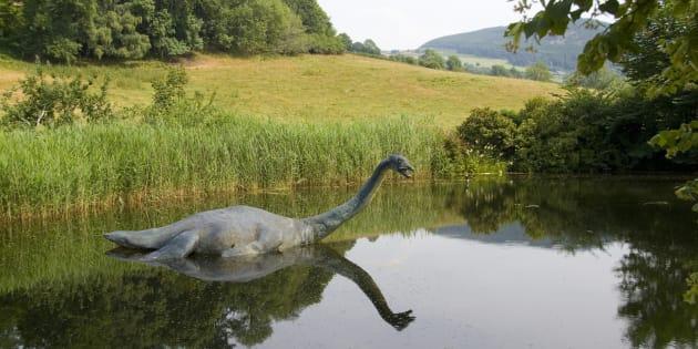 'Nessie' no es un animalito que salga a saludar... de hecho, pocos pueden describirlo.