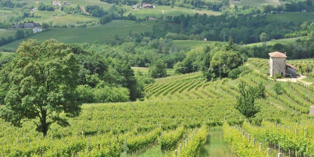Le colline del Prosecco non entrano nel Patrimonio mondiale dell'Unesco