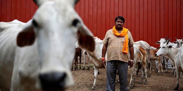 Digvijay Nath Tiwari, the commander of a Hindu nationalist vigilante group established to protect cows, is pictured with animals he claimed to have saved from slaughter, in Agra, India August 8, 2016.