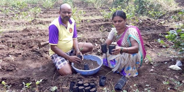 Sangita Mhatre and her husband Shashikant in their jasmine nursery, preparing saplings to be sold to other farmers.
