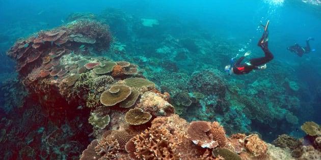 """Un article intitulé """"Nécrologie: la Grande Barrière de Corail"""" émeut la communauté scientifiques et les internautes."""