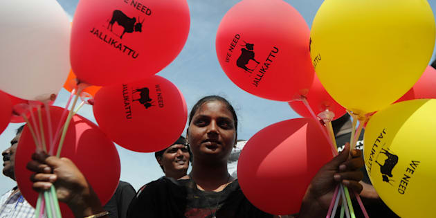 An Indian protester holds balloons during a demonstration against the ban on the Jallikattu bull taming ritual and call for a ban on animal rights orgnisation PETA, in Chennai on January 21, 2017.  Prime Minister Narendra Modi has overturned a Supreme Court ban on a bull-wrestling festival that fuelled massive protests in southern India by demonstrators who called it an attack on their culture. / AFP / Arun SANKAR        (Photo credit should read ARUN SANKAR/AFP/Getty Images)