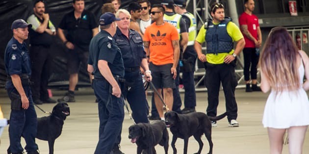 There are growing calls to dump the sniffer dog program and institute pill testing instead