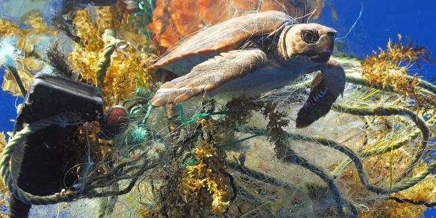 La vie marine sauvage est en train de disparaître